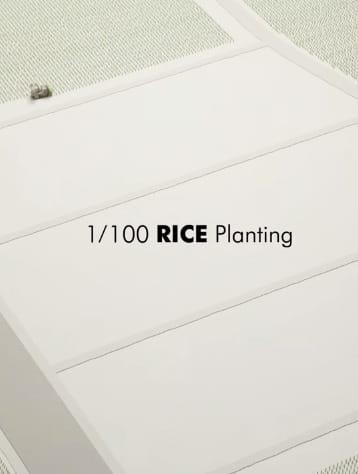 1/100 Rice Planting